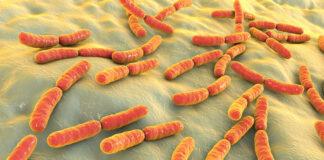 Dieta po antybiotyku